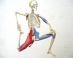 Psoas Muscle and Lower Back Pain